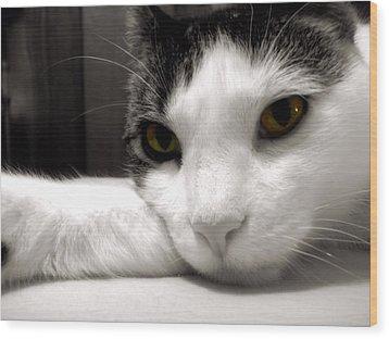 Fabulous Feline Wood Print by JAMART Photography