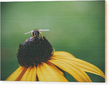 Face Of A Bee Wood Print by Tracy  Jade