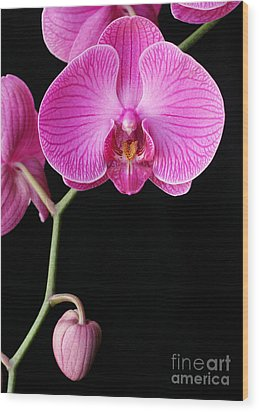 Face Of Orchid Wood Print by Angie Bechanan