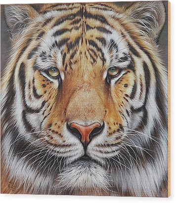 Wood Print featuring the drawing Faces Of The Wild - Amur Tiger by Elena Kolotusha