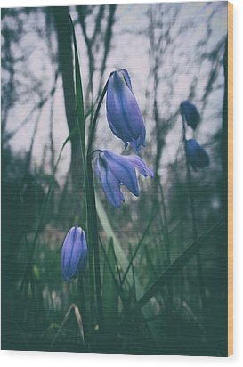 Fade Into The Blue Wood Print by Karen Stahlros