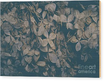 Wood Print featuring the photograph Faded Flowers by Edward Fielding