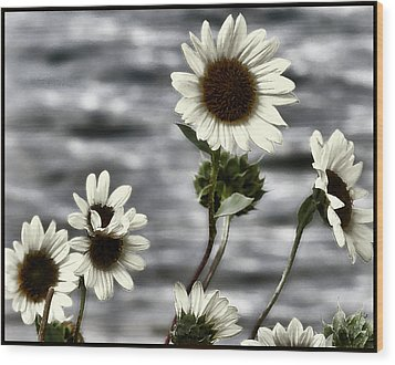 Wood Print featuring the photograph Fading Sunflowers by Susan Kinney