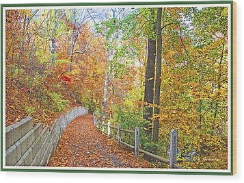 Fairmount Park Path In Autumn Philadelphia Pennsylvania Wood Print by A Gurmankin