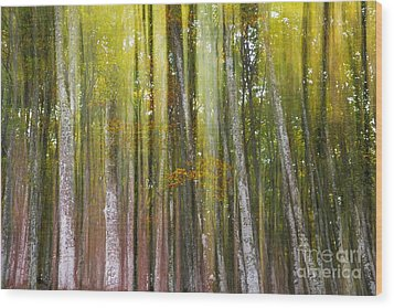 Fairy Forest I Wood Print by Yuri Santin