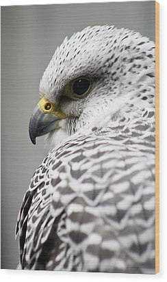 Falcon Wood Print by Mindee Green
