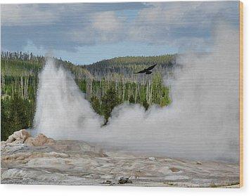 Falcon Over Old Faithful - Geyser Yellowstone National Park Wy Usa Wood Print by Christine Till