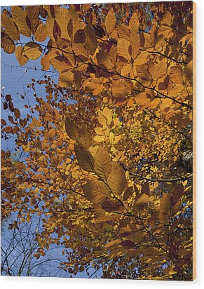 Fall 2010 51 Wood Print by Robert Ullmann