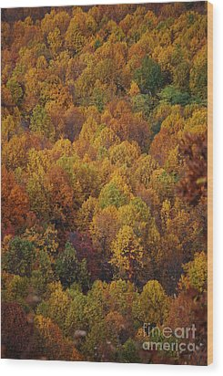 Wood Print featuring the photograph Fall Cluster by Eric Liller