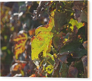Wood Print featuring the photograph Fall Color 1 by Arik Baltinester