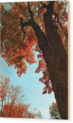 Fall Color 2010 No 3 Wood Print by Joanne Coyle