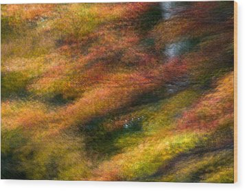 Fall Color Impressions Wood Print by Kevin Blackburn