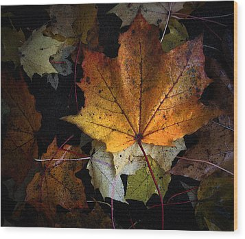 Fall Color Series II Wood Print by Joanne Coyle