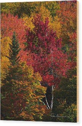 Fall Colors 8743 Wood Print