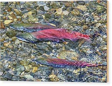 Fall Colors Wood Print by David Lawson