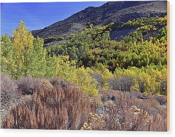Wood Print featuring the photograph Fall Colors In Bishop Creek  by Dung Ma