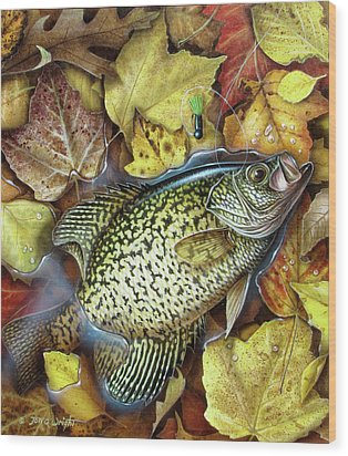 Fall Crappie Wood Print by JQ Licensing