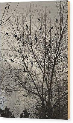 Fall. Evening.blackbirds. Wood Print by Viktor Savchenko