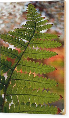 Wood Print featuring the photograph Fall Fern by Gwyn Newcombe