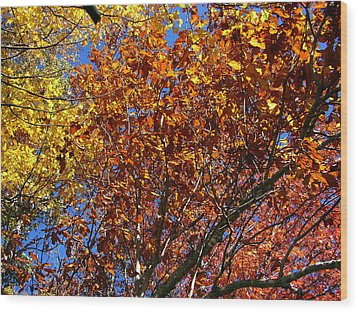 Fall Wood Print by Flavia Westerwelle