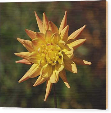 Wood Print featuring the photograph Fall Flower by Richard Bryce and Family