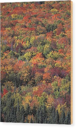 Fall Foliage In New Hampshires White Wood Print by Richard Nowitz
