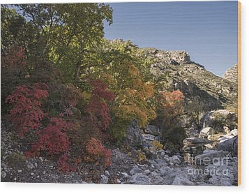 Wood Print featuring the photograph Fall Foliage In The Guadalupes by Melany Sarafis