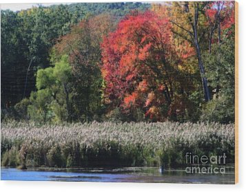 Wood Print featuring the photograph Fall Foliage Marsh by Smilin Eyes  Treasures