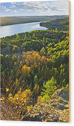 Fall Forest And Lake Top View Wood Print by Elena Elisseeva