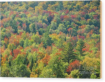 Fall Forest Wood Print by David Lee Thompson