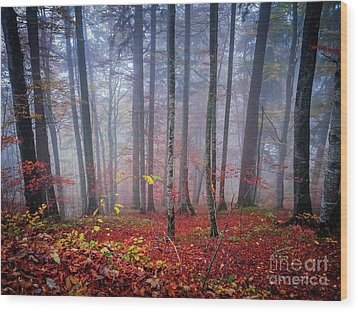 Wood Print featuring the photograph Fall Forest In Fog by Elena Elisseeva