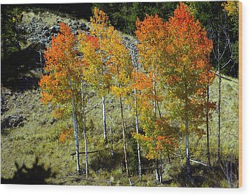 Fall In Colorado Wood Print by Marty Koch