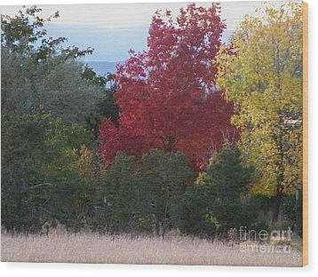 Fall In Santa Fe Wood Print by Brian  Commerford