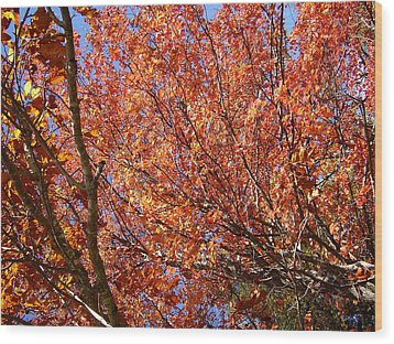 Fall In The Blue Ridge Mountains Wood Print by Flavia Westerwelle