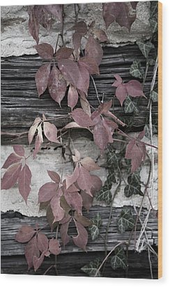 Fall Ivy Wood Print by Pete Hellmann