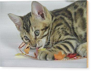 Fall Kitten Wood Print by Shoal Hollingsworth