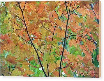 Fall Leaves Wood Print