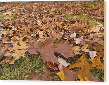 Wood Print featuring the photograph Fall by Lora Lee Chapman