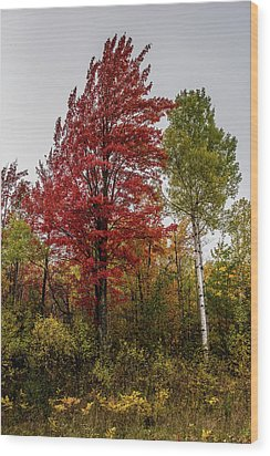 Wood Print featuring the photograph Fall Maple by Paul Freidlund