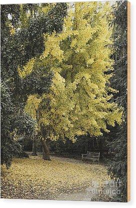 Fall Now Wood Print by Viktor Savchenko
