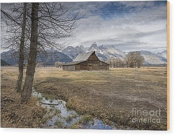 Wood Print featuring the photograph Fall On Mormon Row - Grand Teton National Park by Sandra Bronstein