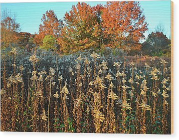 Wood Print featuring the photograph Fall Prairie In Moraine Hills by Ray Mathis