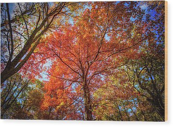 Fall Red Wood Print