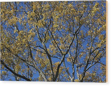 Fall Splendor And Glory Wood Print by Deborah  Crew-Johnson
