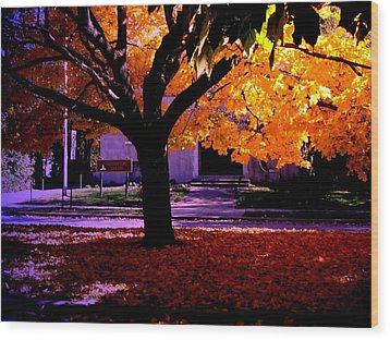 Fall Tree In Woodruff Place Wood Print by Martin Morehead