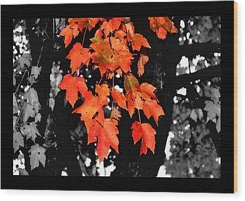 Fall Tree Wood Print by Karen Scovill