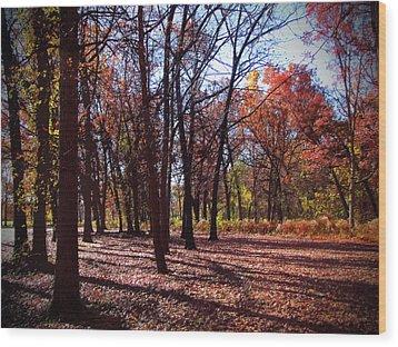 Fall Tree Shadows 2 Wood Print by Cedric Hampton