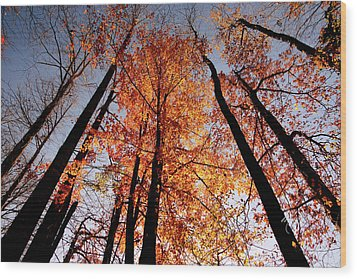 Fall Trees Sky Wood Print