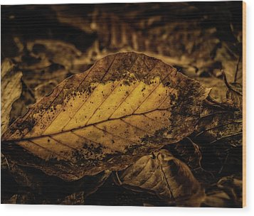 Wood Print featuring the photograph Fallen Color by Odd Jeppesen