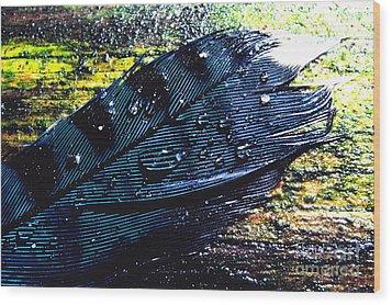 Fallen Feather Wood Print by Thomas R Fletcher